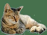 Kattenpension Snorrebaard